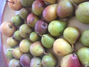 Sekel Pears